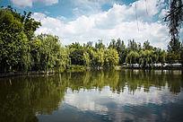 清澈的湖面和翠绿的植物