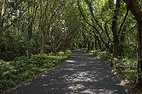 树林间的林荫大道