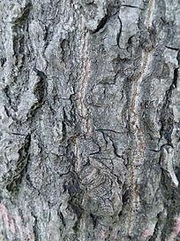 纹理清晰的树皮