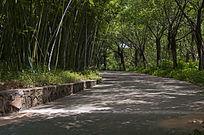 竹林与林荫道路