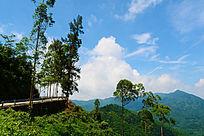 美丽的山上风景