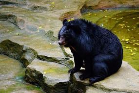 动物园狗熊