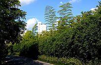 绿色丛林小道