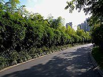 绿色林中小道