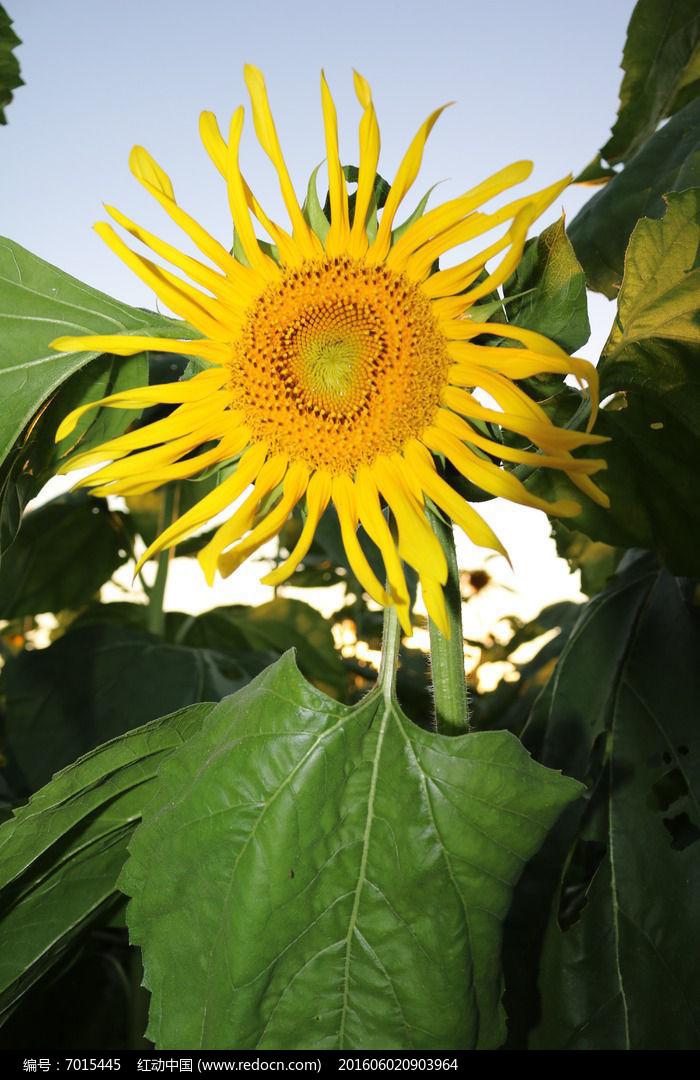 清新的花朵与清新的叶子图片