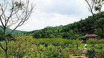 山坡丛林风景