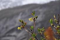 小树枝上一朵花