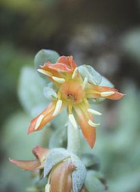 盛开的多肉植物花卉
