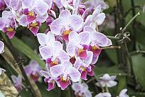 一簇淡紫色的兰花