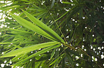 阳光下竹林中翠绿的竹子
