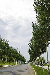 鞍山万水河边公路树木与漫天白云