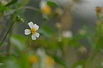 小野花花草