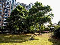 樟树小区绿化