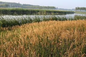 莲花湖湿地