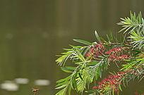 红花绿叶树叶风景图片