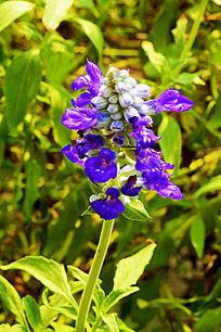 紫色植物花卉