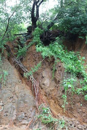 山体岩石树根