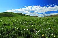 草原花海风景