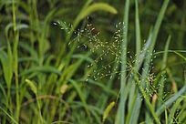 美丽草丛背景图