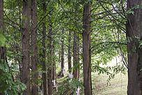 一片茂密的树林