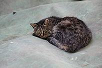 趴窝的小黑猫