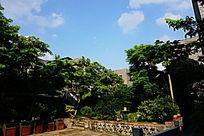 四合院绿化建筑