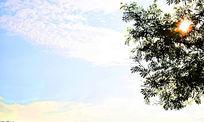 树缝中的阳光