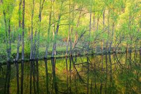 湖岸阳光树林