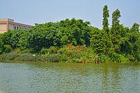 湖泊边上的花坛