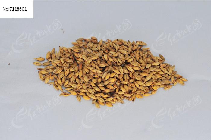 中草药麦芽图片