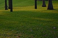 草地上的树木树干风景图片