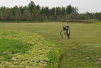 草地上花坪旁那辆自行车
