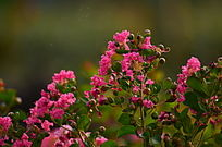 粉色小花风景图片