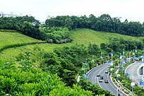 公路旁山坡绿化
