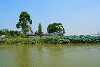 荷花池上的园林建筑