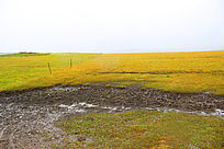 红原大草原风景雨后草地