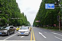 绿树环绕的马路