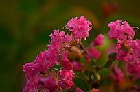 一簇粉色小花风景图片
