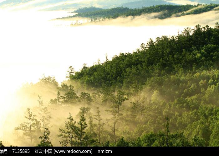 云雾大森林图片