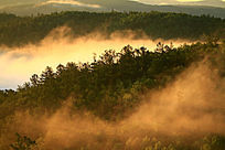 云雾缥缈的大森林
