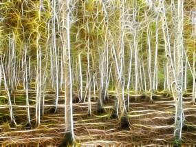 电脑抽象画《梦幻桦林》