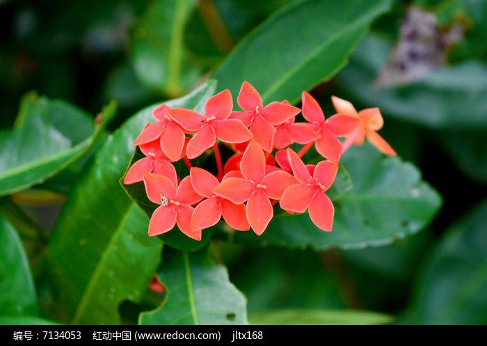 红色美丽花朵图片