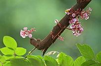 树干上的粉色小花