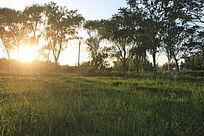 美丽的草地