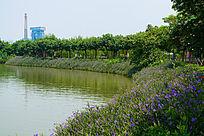 休闲场所河边的花草