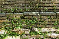长草的青砖墙
