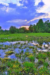 湿地草暮色风景
