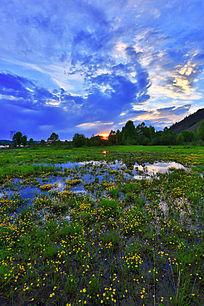 沼泽野花风景