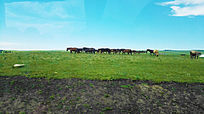 拉峻大草原上的马群
