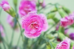 粉色鲜花图